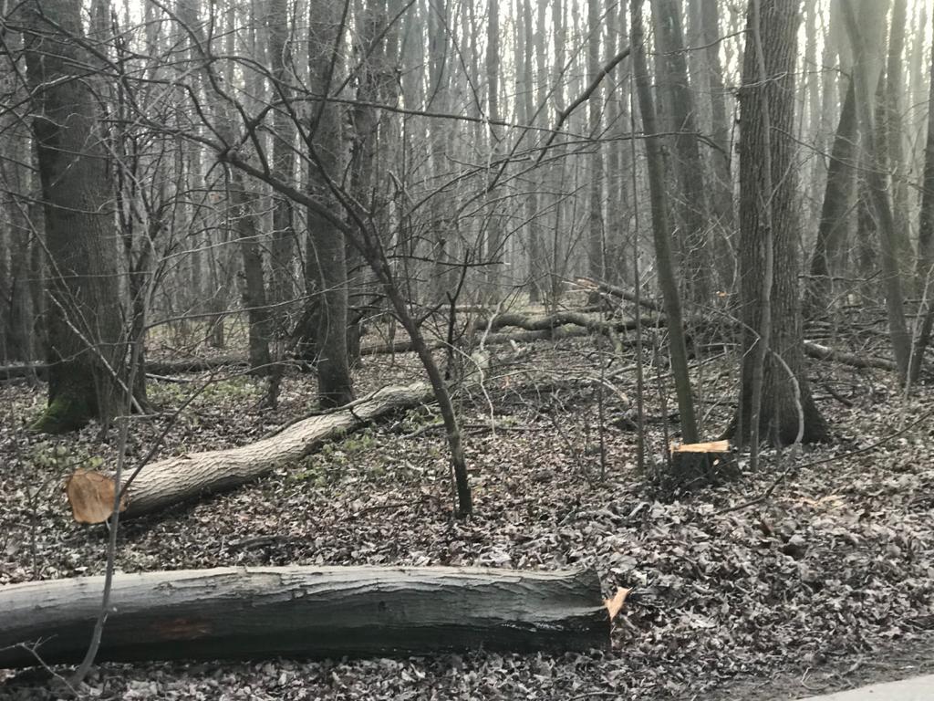 Pădurea Băneasa în pericol de dispariție
